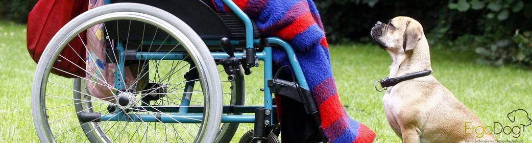 Interaktion zwischen Patient, Rollstuhlfahrer, und Therapiebegleithund mit Leckerchen