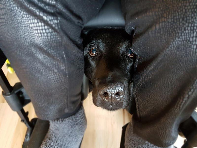 Foto: Mensch im Rollstuhl, darunter schaut ein Therapiehund hervor: Thema: Nähe und Distanz bei der Behandlung psychisch erkrankter Menschen